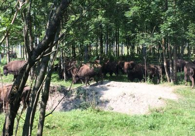 Sortie en autocar : La Ferme aux Bisons