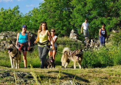 Sled Dogs and hiking with dog