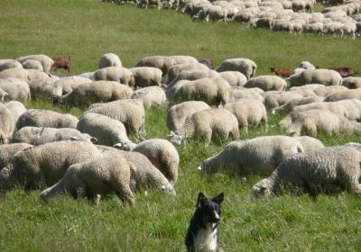 A day out meeting shepherds in the mountain pastures