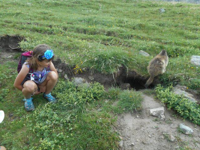 A really non fierce marmot – Refuge de la Chamoissière – Villar d'Arène – La Grave