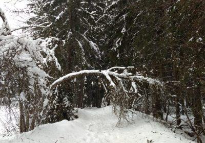 Snowshoeing – Venosc Village – Cascade de la Muzelle