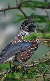 Découverte et observations des oiseaux